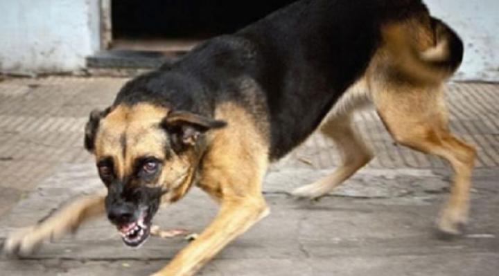 Jauría de perros ataca a un joven con Síndrome de Down en Sucre