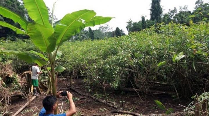 Pueblos indígenas amazónicos reducen deforestación con tecnología satelital