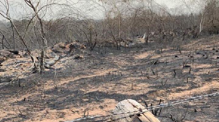 "Iglesia señala como irresponsable el DS 3973 que autoriza ""quema controlada"" de bosques"
