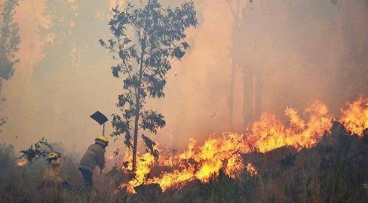 Los incendios no se detienen: En 10 días se quemaron 1,2 millones de hectáreas, el total llega a 5,3 millones