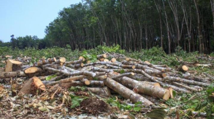 Las áreas protegidas están en riesgo debido al narcotráfico, quemas indiscriminadas y explotación de recursos