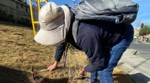 En este quinquenio plantarán 100 mil plantines en el área urbana de La Paz