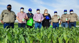 Parcelas demostrativas fertilizadas con urea boliviana duplican productividad de cultivos