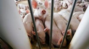 """Identifican en China otro virus respiratorio """"con potencial para convertirse en pandemia"""""""
