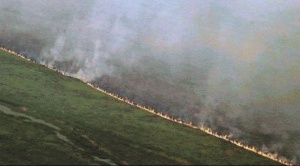 Incendios consumen 10 por ciento del humedal más grande del mundo, el Pantanal
